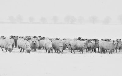 Herd immunity – what's that, and is it real?